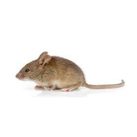 Eliminação de Ratos RJ
