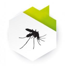 Dedetização de mosquitos