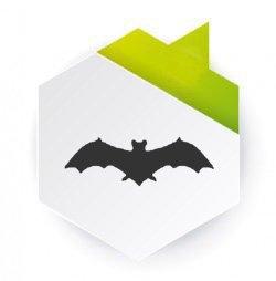 Dedetização de pombos e morcegos
